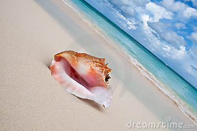 Beige shell on white sand beach near blue ocean