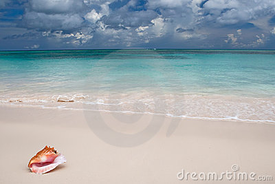 Beige shell on white sand beach near blue ocean
