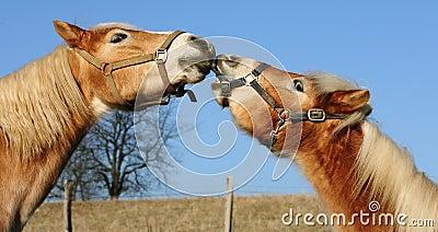 Beijando cavalos