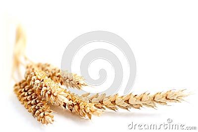 Beira do trigo