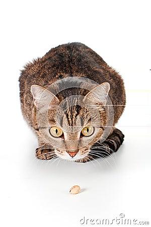 ?at bekijkt een pistache