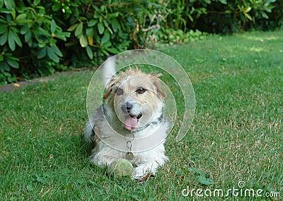 Beleibter Hund