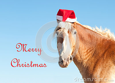 Belgian Draft horse wishing Merry Christmas