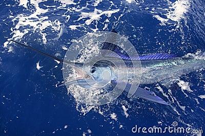 Belle pêche de sport réelle d aiguille de mer de marlin blanc
