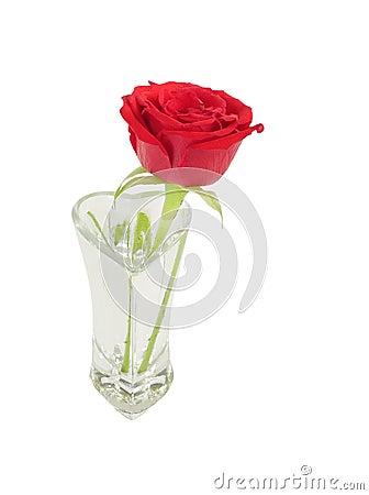 belle rose rouge a maintenu dans un vase en verre photographie stock libre de droits image. Black Bedroom Furniture Sets. Home Design Ideas