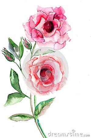 Belles fleurs de roses