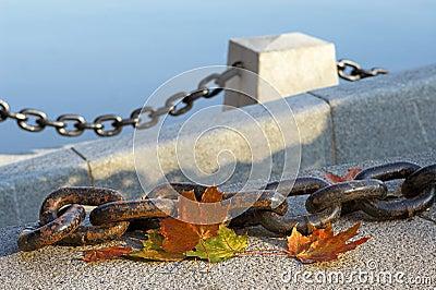 Belleza del otoño de descoloramiento