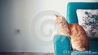 Bellissimo gatto rosso, sdraiato e rilassato su un divano blu in una giornata di sole stock footage