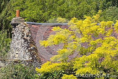 Bello cottage inglese con i colori di autunno fotografie for Vecchio cottage inglese