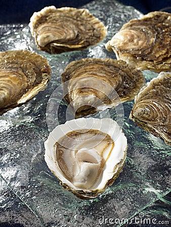 Belon flat oysters