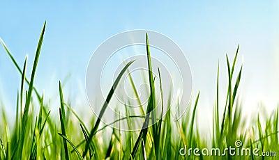 Below the grass