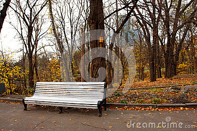Bench in the autumn city park