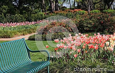 Bench in the beautiful garden