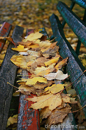 Bench covered with fallen leaves
