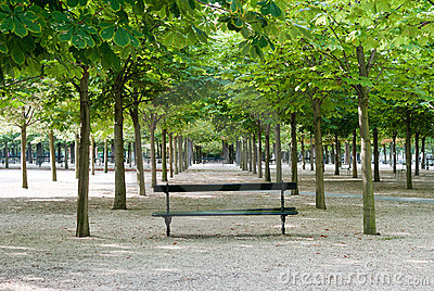 Bench in Luxembourg Gardens