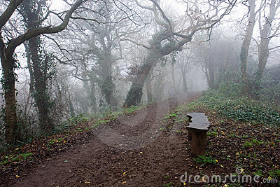 Bench Beside a Misty Path