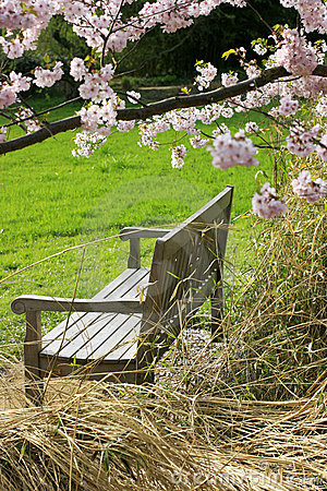 Free Bench Of Peace Stock Images - 13736264