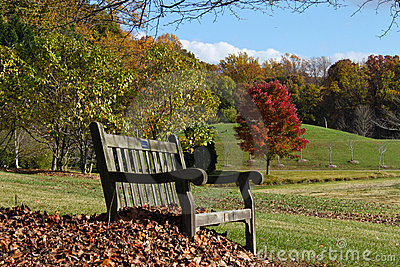 Bench in Park Setting Virginia Autumn Suburbs