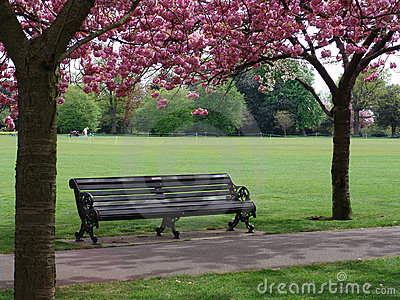 Bench with pink flowering trees