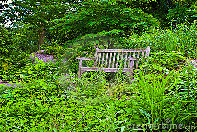 Bench in Plant Trail