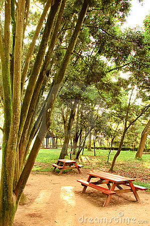 A bench with table peacefully between tree