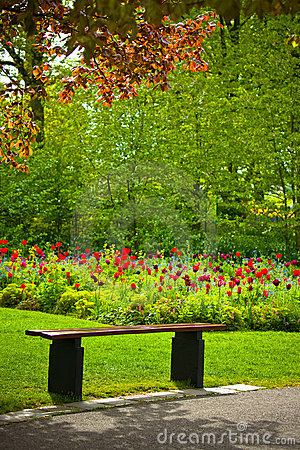 Free Bench Under A Tree With Flowers In A Park Stock Image - 14857621