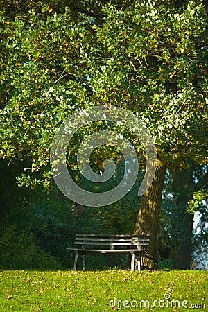 Bench under Oak