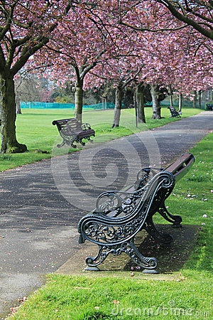 Bench under pink blossoms in Greenwich Park