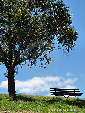 Bench under the tree.