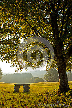 Bench under tree in autumn on golf course