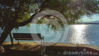 Bench Under Tree During Day Beside Body Of Water Free Public Domain Cc0 Image