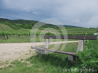 Bench in a Vinyard