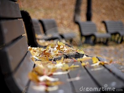 Benches covered with fallen leaves