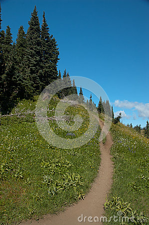 Bend in the Trail