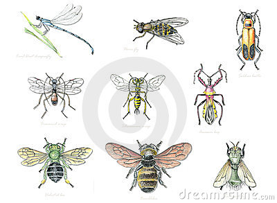 Beneficial Garden Insects 2