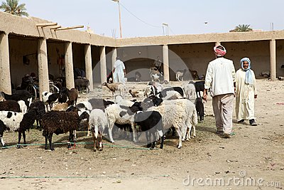 Berber goats market Editorial Photo