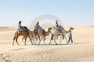Berber leading tourists on camels Editorial Stock Image
