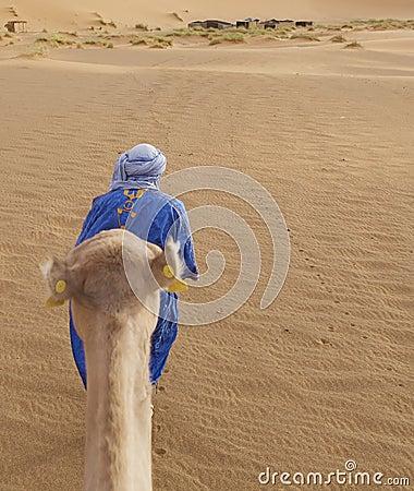 Berber man with camel Editorial Stock Photo