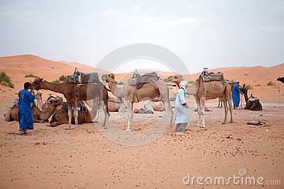 Berber men with camels Editorial Photo