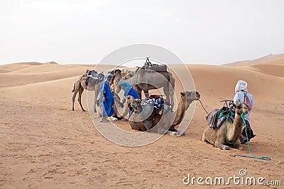 Berber men with camels Editorial Image