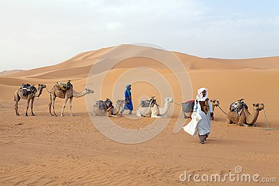 Berber men with camels Editorial Photography