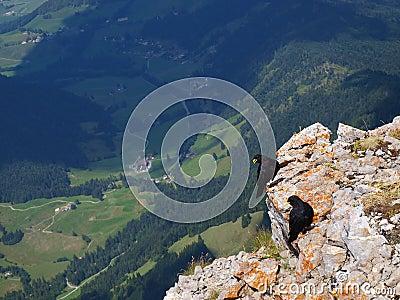 Berg und Vögel
