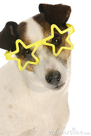 Berömd hund