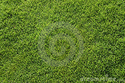 Bermuda grass top view