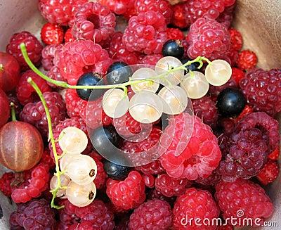 Berries. Background