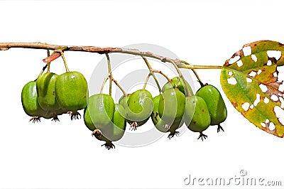 Berries of Far-East 2