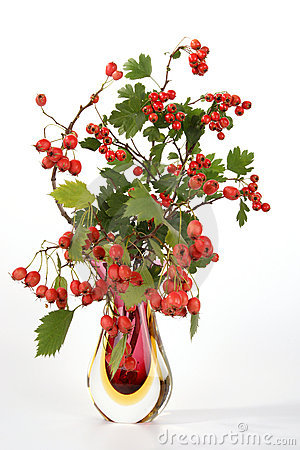 Berries of hawthorn in a glass vase