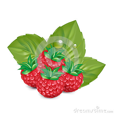 Berries with leaves isolated on white