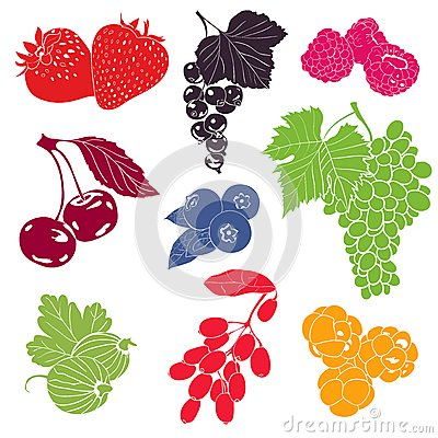 Berries Vector Collection
