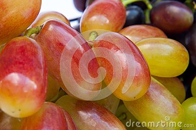 Berries of vine